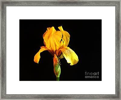 Light Shine On Me Framed Print by Marsha Heiken