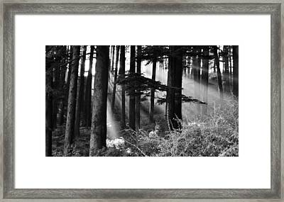 Framed Print featuring the photograph Light Through The Trees by Don Schwartz