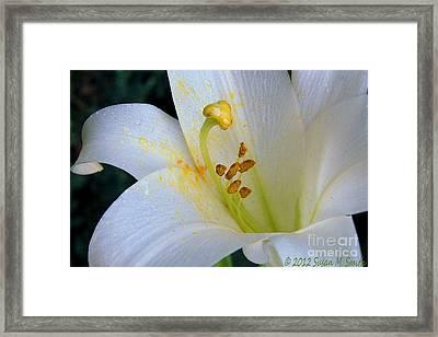 Light White Framed Print
