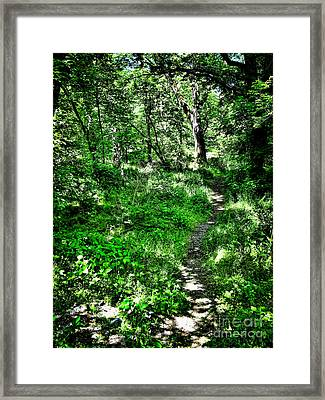 Lighted Path Framed Print by Colleen Kammerer