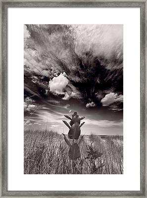 Lighthouse Beach Northshore Framed Print by Steve Gadomski