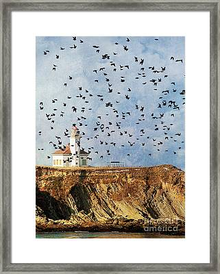 Lighthouse Birds  Framed Print by Billie-Jo Miller