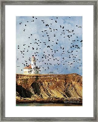 Lighthouse Birds  Framed Print