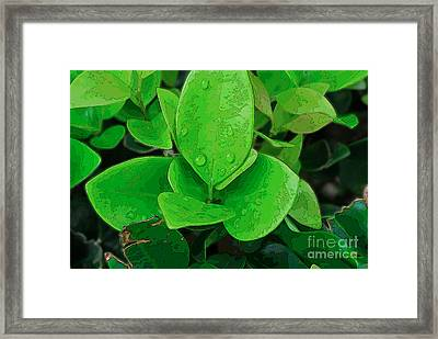 Ligustrum Framed Print
