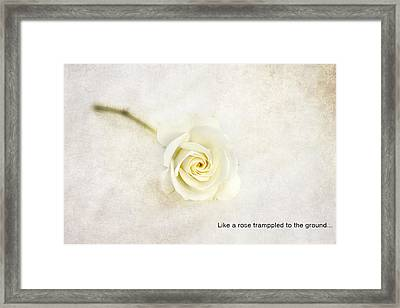 Like A Rose... Framed Print