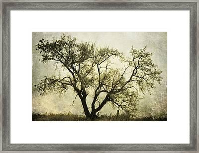 Likeable  Elm Framed Print
