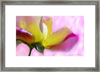 Framed Print featuring the photograph Lila Y Amarillo by Alfonso Garcia