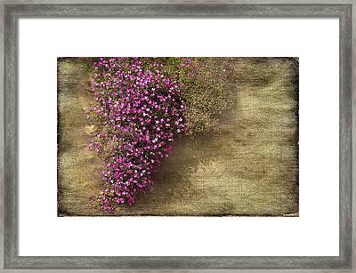 Lilac Branch Framed Print by Svetlana Sewell