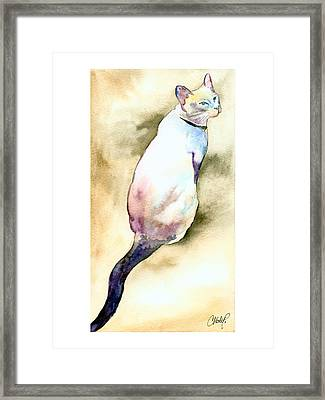 Lilac Point Siamese Cat Framed Print
