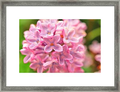 Framed Print featuring the photograph Lilac  by Puzzles Shum