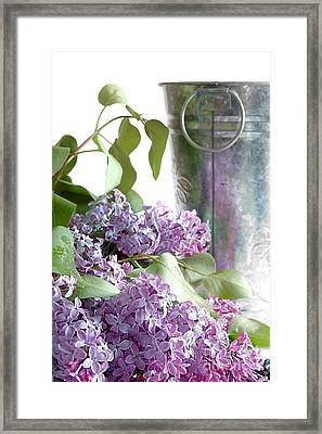 Lilacs Framed Print by HD Connelly
