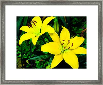 Lilies Framed Print by Michael Ray