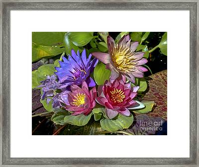 Lilies No. 11 Framed Print