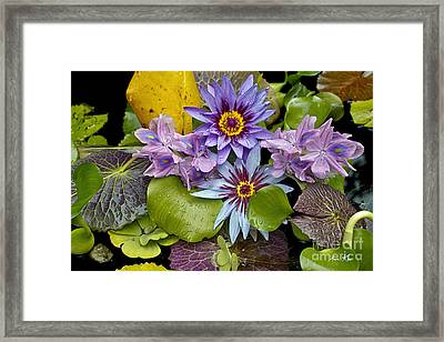 Lilies No. 12 Framed Print