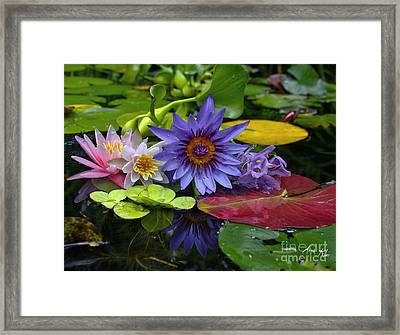 Lilies No. 13 Framed Print