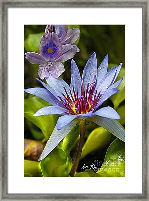 Lilies No. 14 Framed Print
