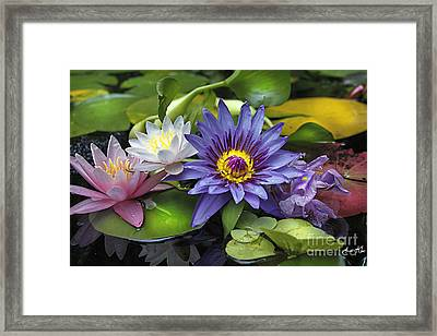 Lilies No. 16 Framed Print