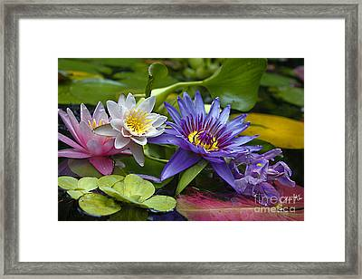 Lilies No. 17 Framed Print