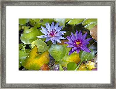 Lilies No. 2 Framed Print