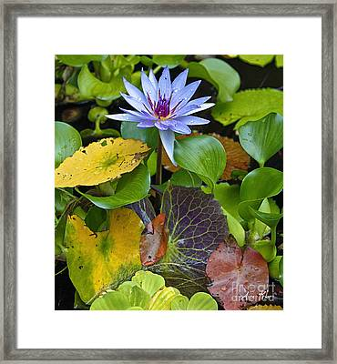 Lilies No. 24 Framed Print