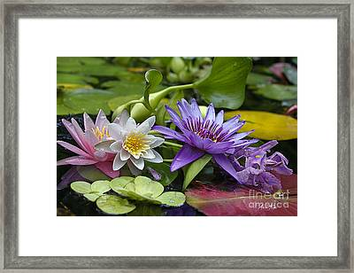 Lilies No. 26 Framed Print