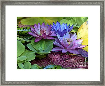Lilies No. 27 Framed Print by Anne Klar