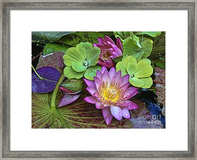 Lilies No. 28 Framed Print
