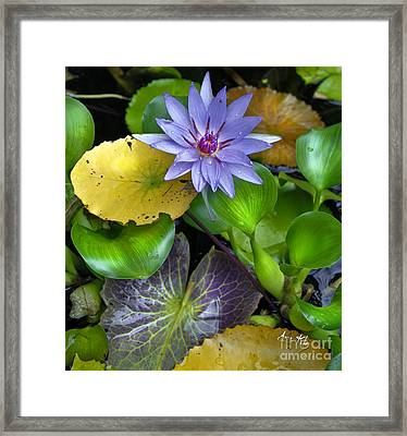 Lilies No. 3 Framed Print
