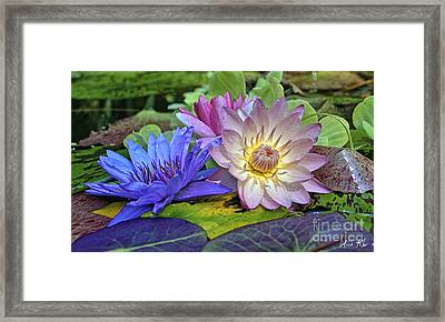 Lilies No. 30 Framed Print by Anne Klar