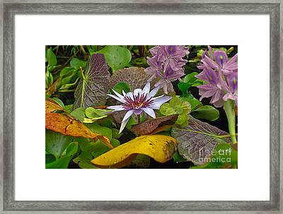 Framed Print featuring the photograph Lilies No. 35 by Anne Klar