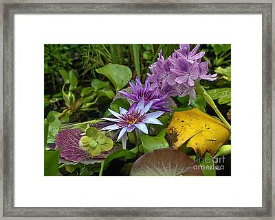 Lilies No. 39 Framed Print by Anne Klar