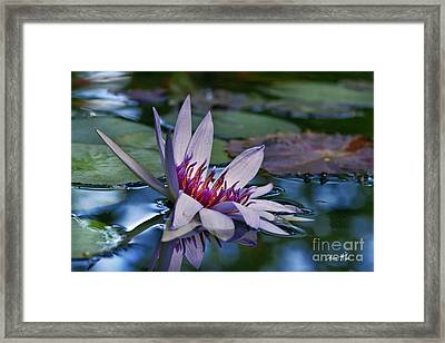 Lilies No. 40 Framed Print
