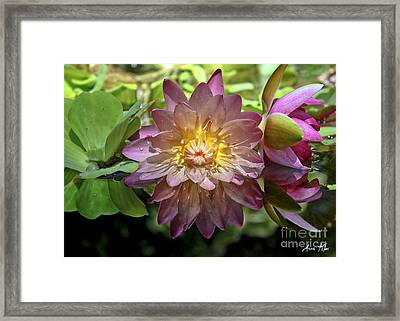 Framed Print featuring the photograph Lilies No. 43 by Anne Klar