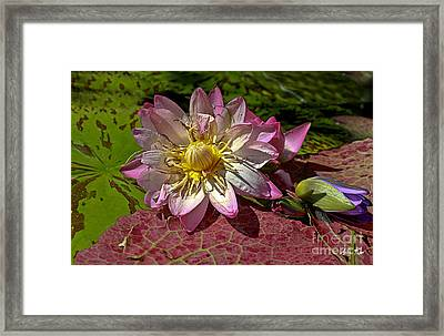Lilies No.19 Framed Print
