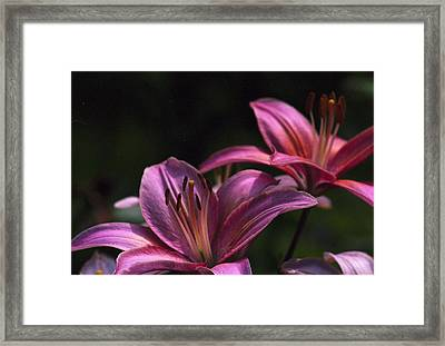 Framed Print featuring the photograph Lilies Of The Field by Wanda Brandon