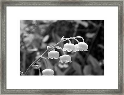 Lilies-of-the-valley Framed Print