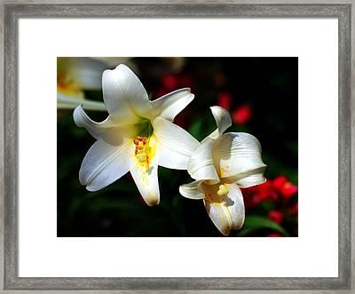 Lilium Longiflorum Flower Framed Print