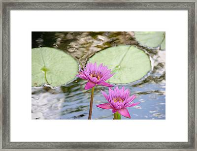 Lillies Framed Print by Herman Boodoo