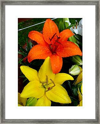 Lillies In Vermont Framed Print
