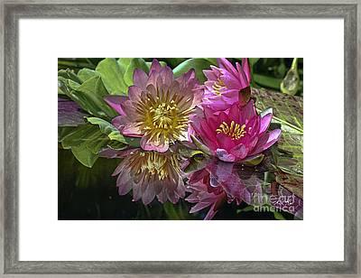 Lillies No. 8 Framed Print
