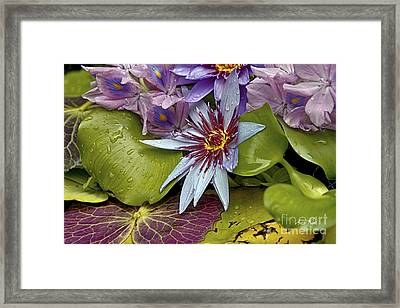 Lillies No. 9 Framed Print by Anne Klar