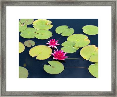Lillies On Blue Framed Print