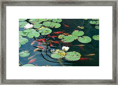 Framed Print featuring the photograph Lilly Dance by Dan Menta