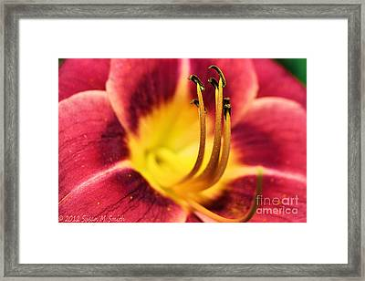 Lilly For A Day Framed Print