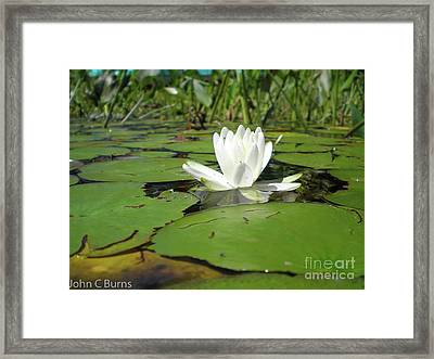 Framed Print featuring the photograph Lilly by John Burns