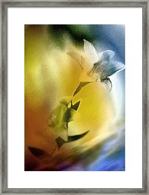 Lilly Framed Print by Mauro Celotti