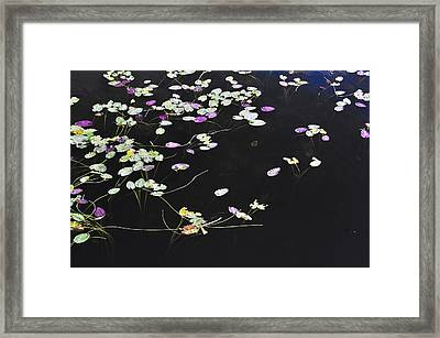 Lilly Pads Framed Print by Andres LaBrada