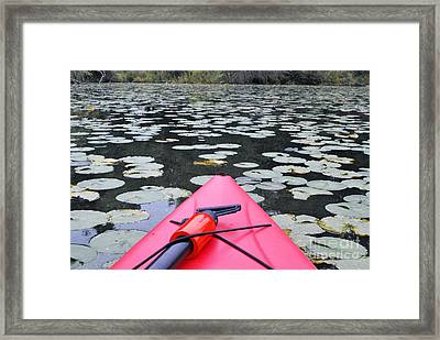 Lilly Pads With Boat Framed Print by Bill Thomson