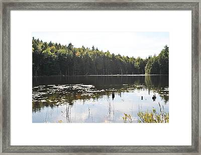 Lilly Pond Framed Print by Mary Fish