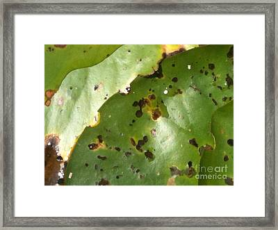 Lilly Tan Line Framed Print by Trish Hale